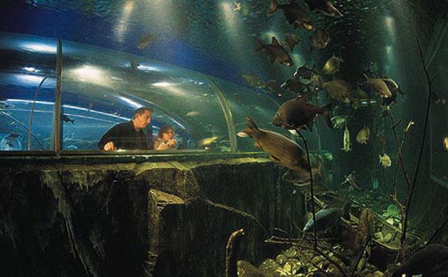 lake-district-cottages-aquarium